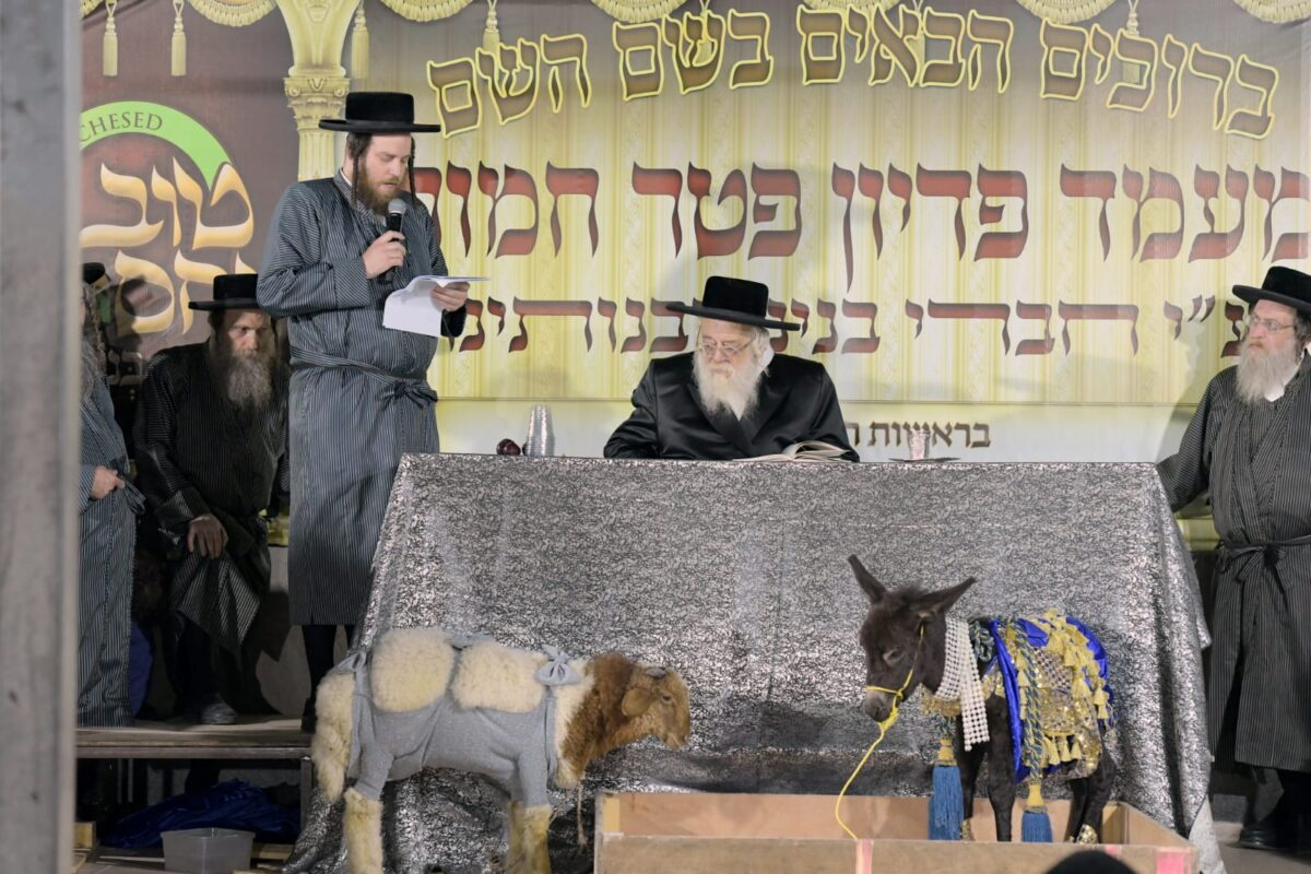 Watch us Celebrate the Rare Mitzvah of Pidyon Peter Chamor!